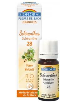 Fleur de Bach Scléranthe (scleranthus) N°28 granules