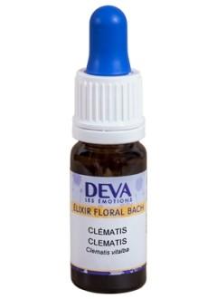Clématite (Clematis) - Erable