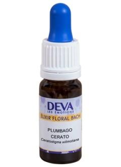 Plumbago (Cerato) - Erable