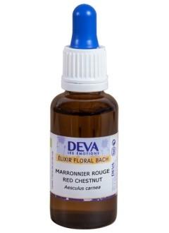 Marronnier rouge (Red Chestnut) - 30 ml