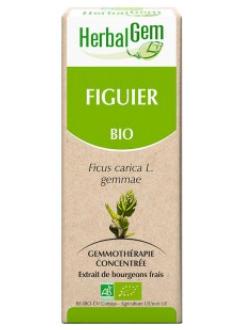 Figuier Bio - 15 ml