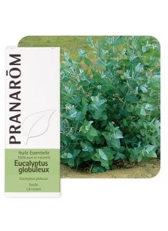 Huile Essentielle XL Eucalyptus globuleux