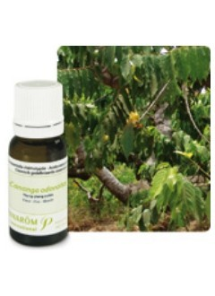 Huile essentielle XL Ylang Ylang extra