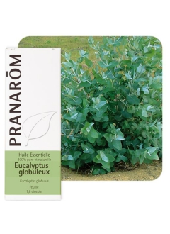 Huile Essentielle XXL Eucalyptus globuleux